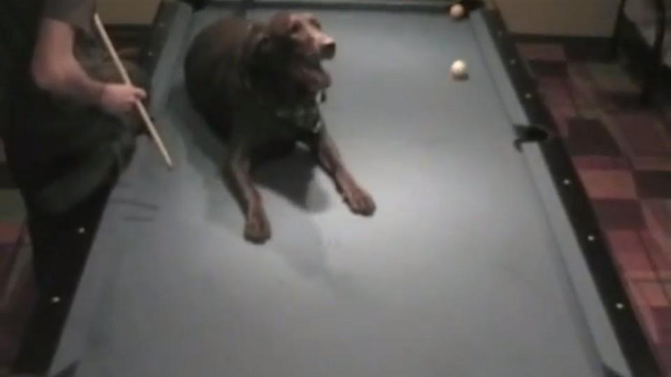 Pool Trick Shots Phenom